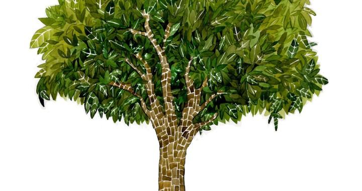 drzewo drzewa