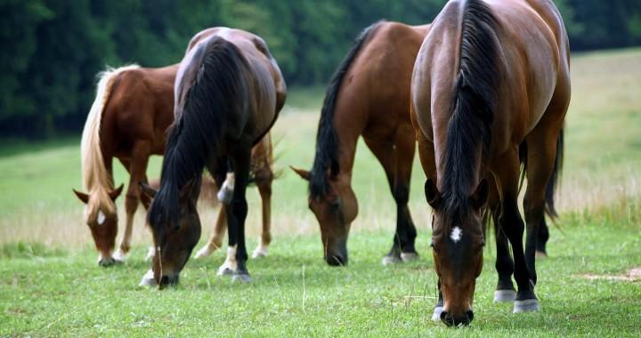 razem-konie-krasc