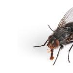 Jak zabić muchę?