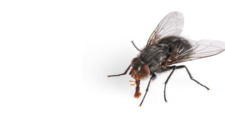jak-zabic-muche